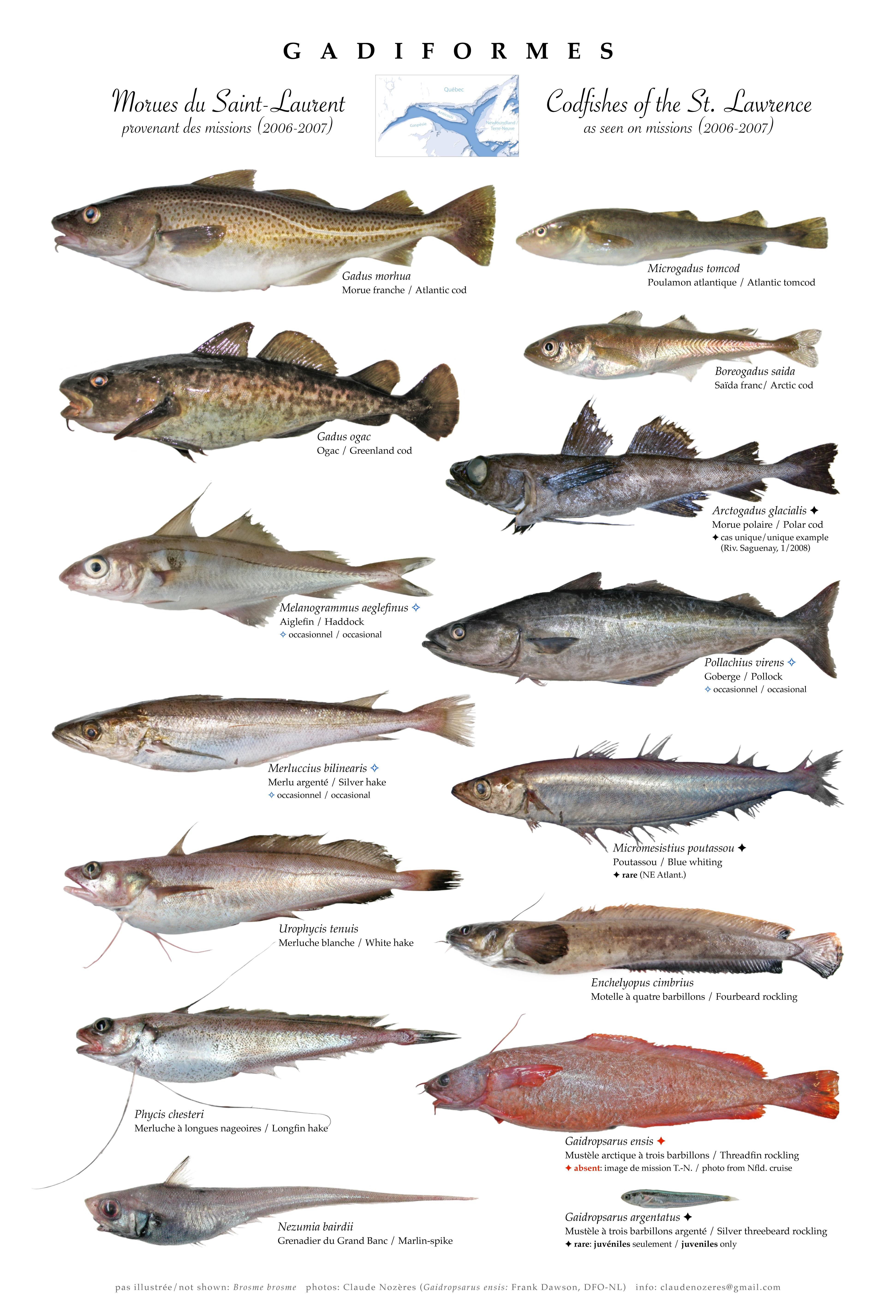 Canadian Register of Marine Species