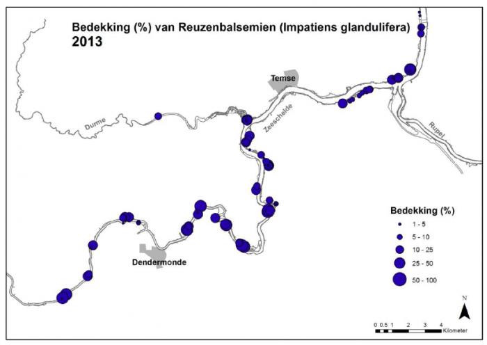 Bedekking (%) van Reuzenbalsemien (Impatiens glandulifera) in 2013 in de permanente<br /> kwadraten gelegen langs de Zeeschelde tussen Berlare en Kruibeke.