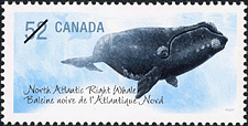 Canadian Postage Stamp (2007): North Atlantic Right Whale
