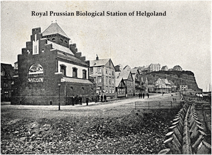 Helgoland in 1908