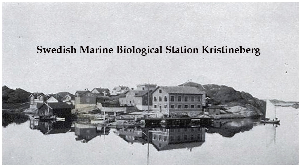 The Royal Swedish Marine Zoological Station  (Kristineberg) in 1909