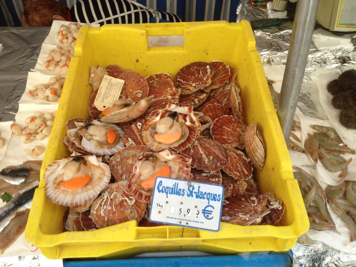 Great Atlantic scallop