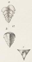 Verneuiina spinulosa Reuss, 1850