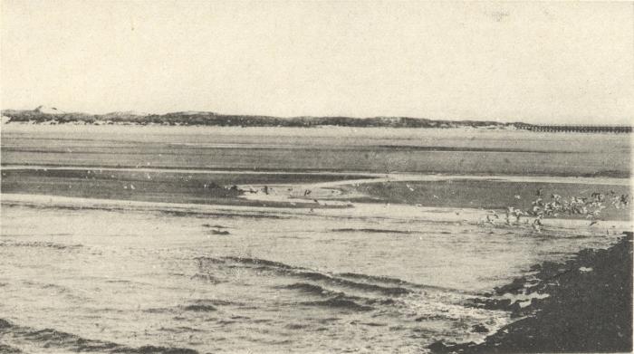 Massart (1908, foto 005)