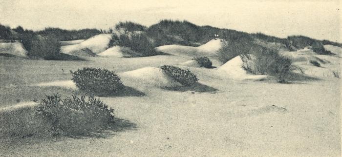 Massart (1908, foto 009)