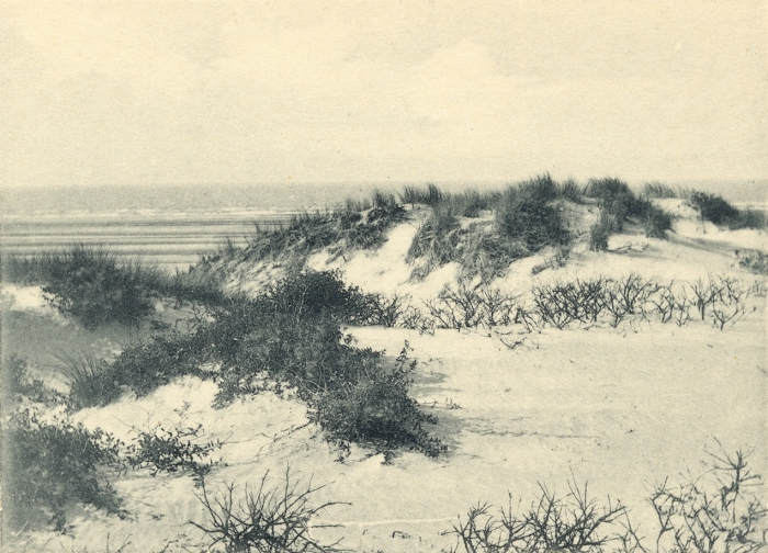 Massart (1908, foto 037)