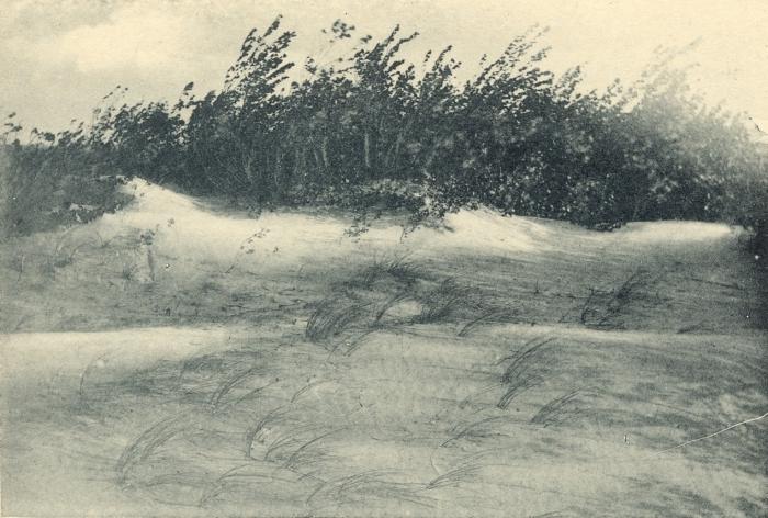 Massart (1908, foto 040)
