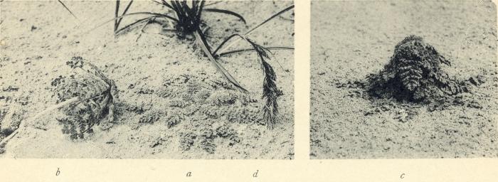Massart (1908, foto 071)