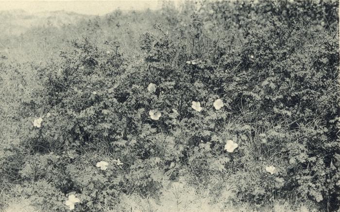 Massart (1908, foto 073)