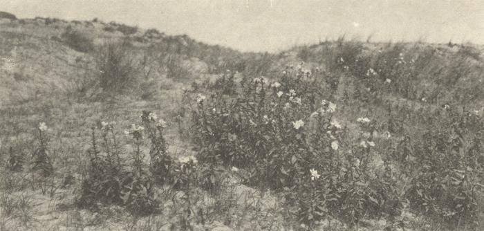 Massart (1908, foto 077)