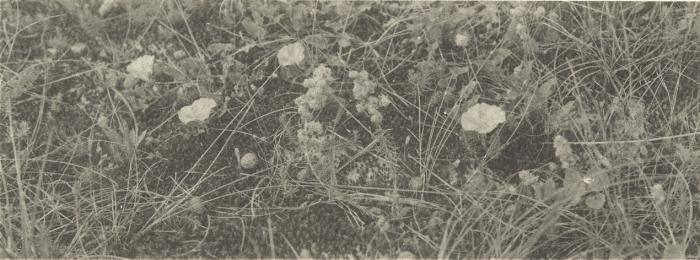 Massart (1908, foto 079 B.)