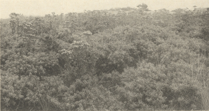 Massart (1908, foto 080)