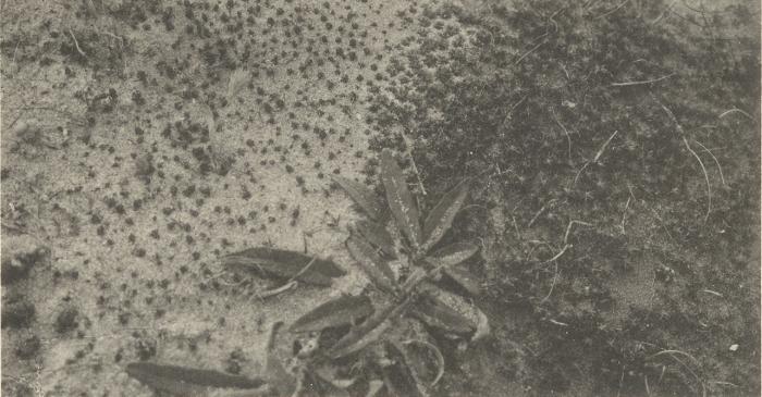 Massart (1908, foto 081)
