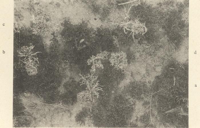 Massart (1908, foto 082)