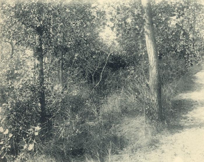 Massart (1908, foto 086)