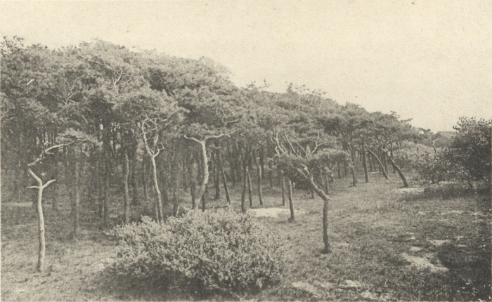 Massart (1908, foto 087)