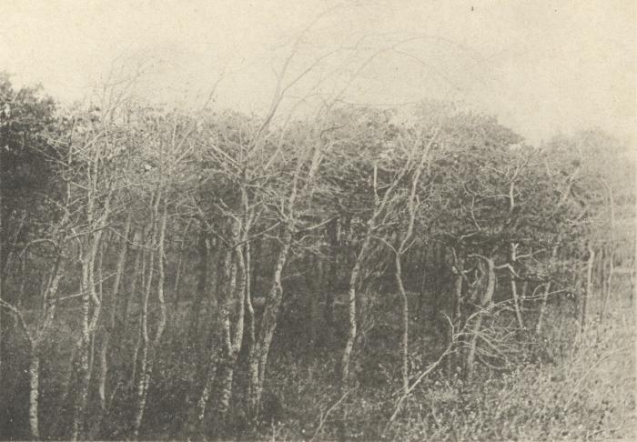 Massart (1908, foto 090)