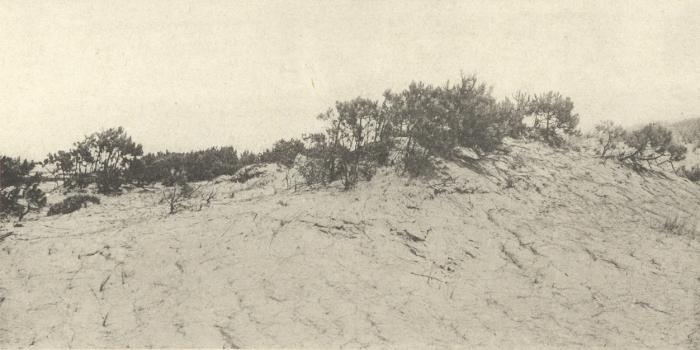 Massart (1908, foto 092)