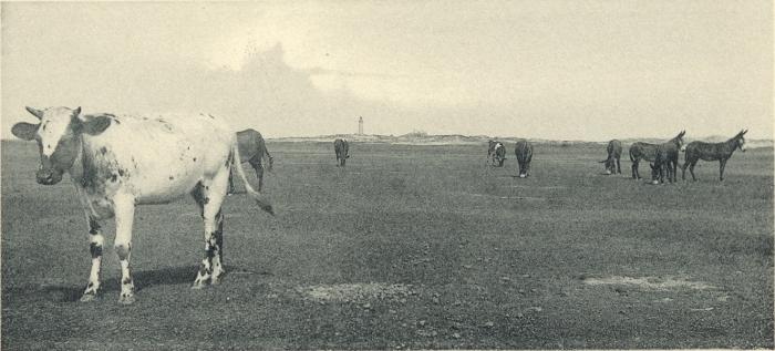 Massart (1908, foto 097)