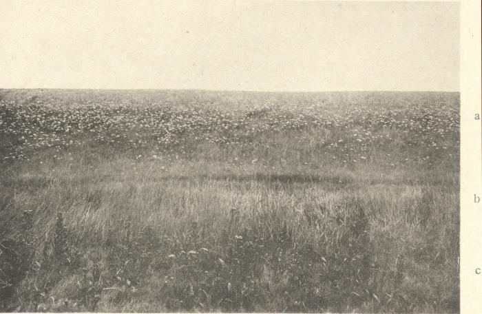 Massart (1908, foto 101)