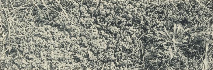 Massart (1908, foto 177)