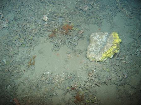 sponge from 720 m deep