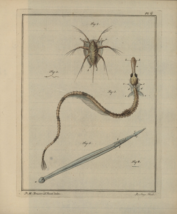 Slabber (1778, pl. 06)