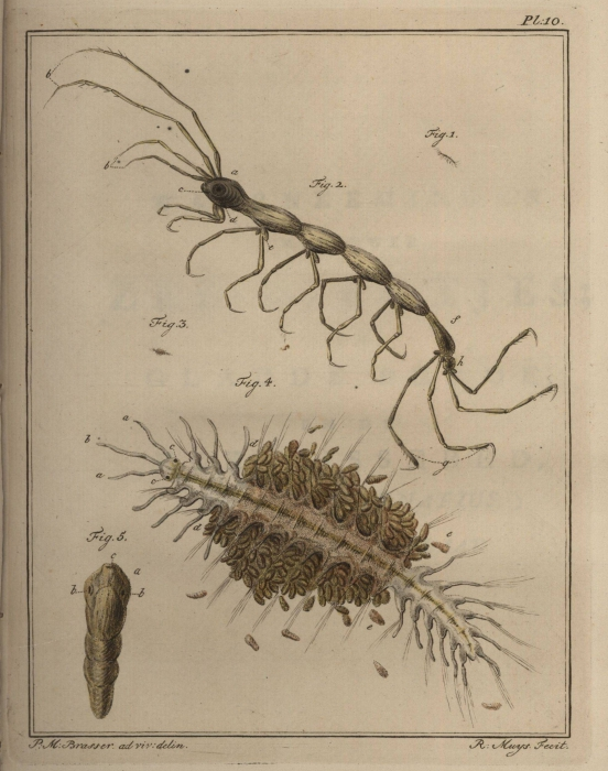Slabber (1778, pl. 10)
