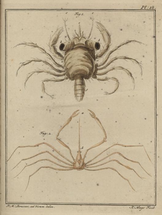 Slabber (1778, pl. 18)