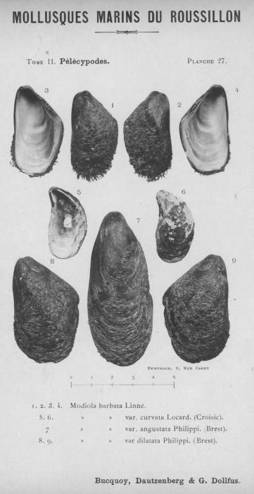 Bucquoy et al. (1887-1898, pl. 27)