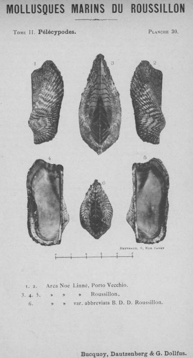 Bucquoy et al. (1887-1898, pl. 30)