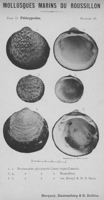 Bucquoy et al. (1887-1898, pl. 34)