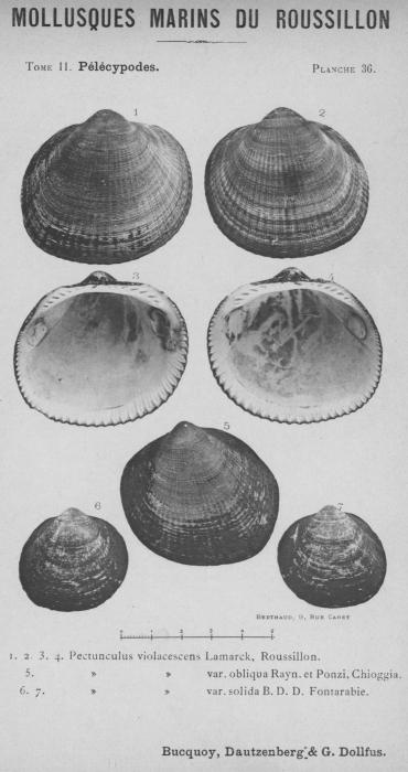 Bucquoy et al. (1887-1898, pl. 36)