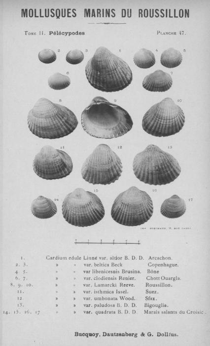 Bucquoy et al. (1887-1898, pl. 47)
