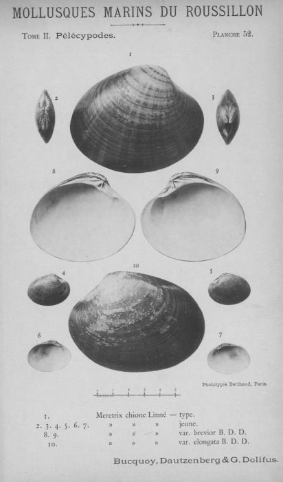 Bucquoy et al. (1887-1898, pl. 52)