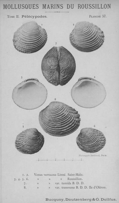 Bucquoy et al. (1887-1898, pl. 57)