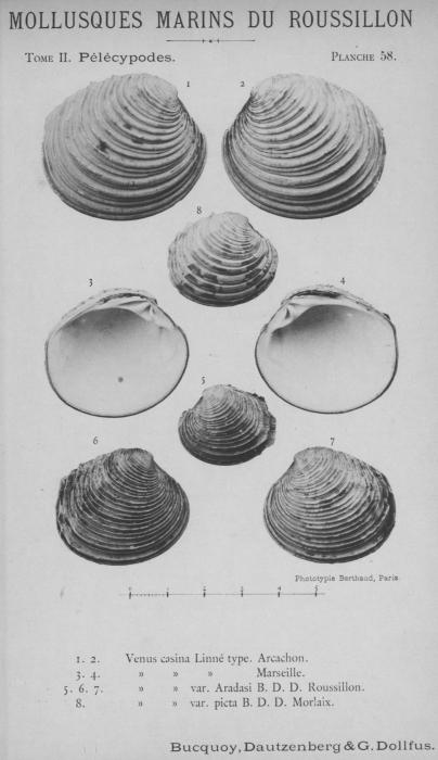 Bucquoy et al. (1887-1898, pl. 58)
