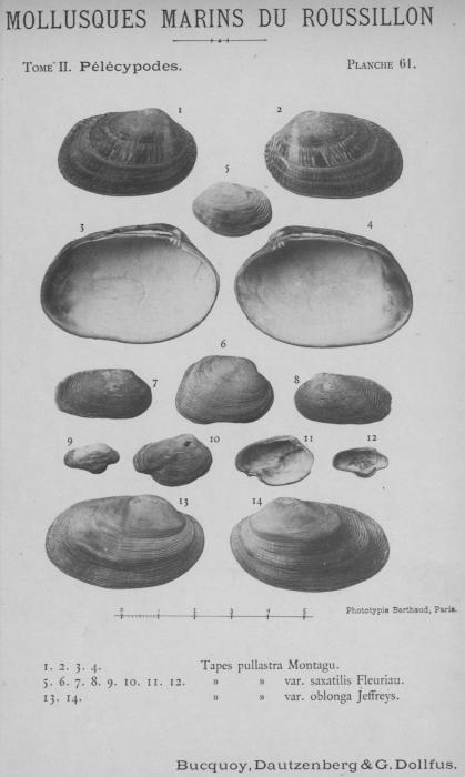 Bucquoy et al. (1887-1898, pl. 61)