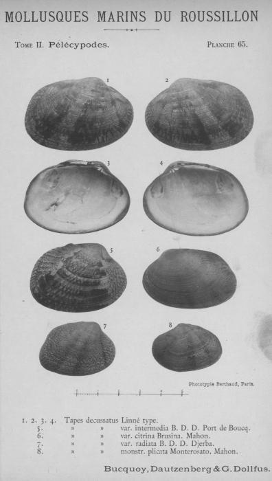 Bucquoy et al. (1887-1898, pl. 65)