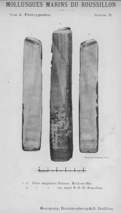 Bucquoy et al. (1887-1898, pl. 72)