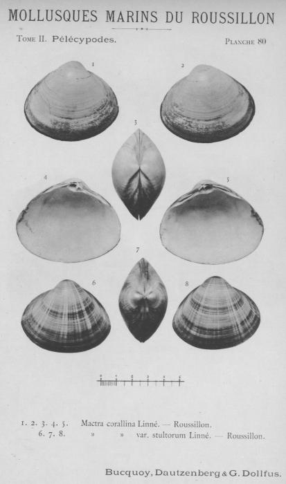 Bucquoy et al. (1887-1898, pl. 80)