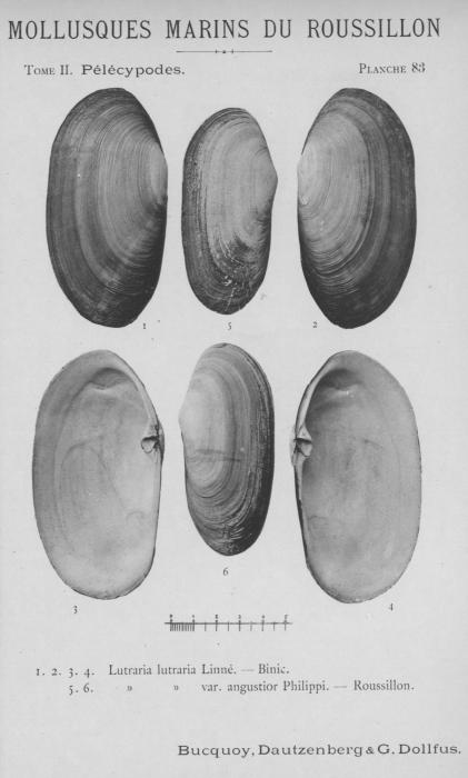 Bucquoy et al. (1887-1898, pl. 83)