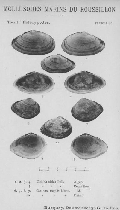 Bucquoy et al. (1887-1898, pl. 93)