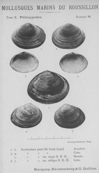 Bucquoy et al. (1887-1898, pl. 96)