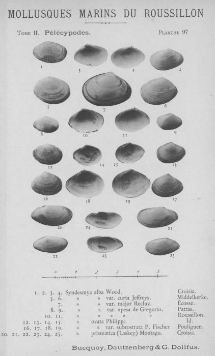 Bucquoy et al. (1887-1898, pl. 97)