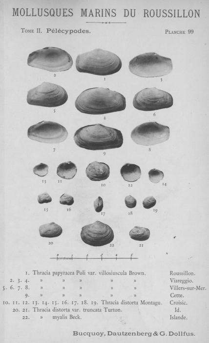 Bucquoy et al. (1887-1898, pl. 99)