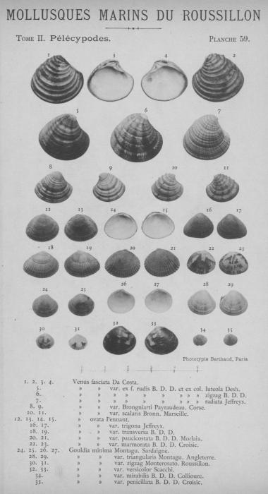 Bucquoy et al. (1887-1898, pl. 59)