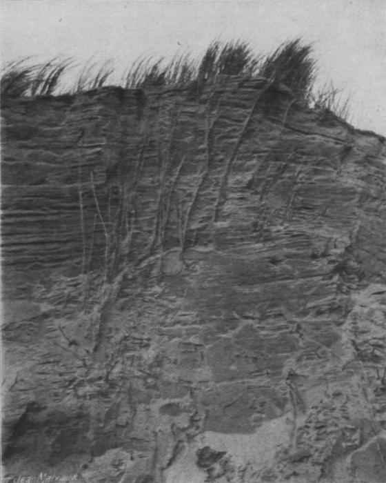 Massart (1913, foto 24)