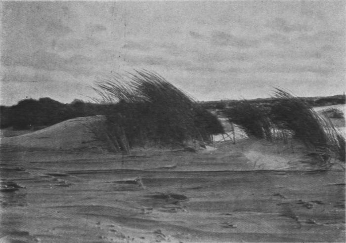 Massart (1913, foto 25)