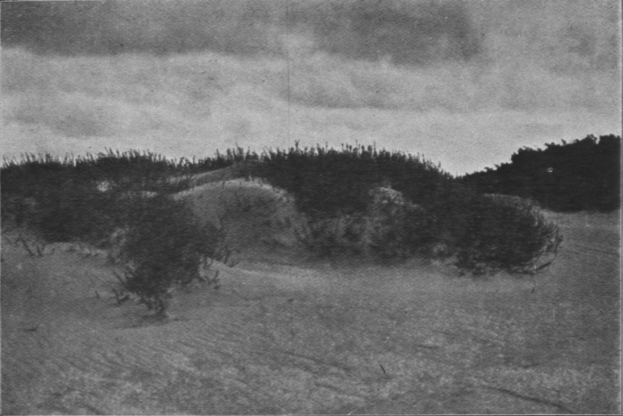 Massart (1913, foto 26)
